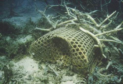 A fish pot secured to the bottom with Staghorn Acropora.