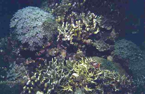 A diverse assemblage of hard and soft corals.