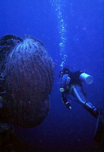A large barrel sponge on the drop-off of the northern atoll.